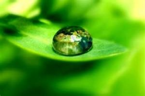 Raindrop on leaf - Link to Present Moment Articles